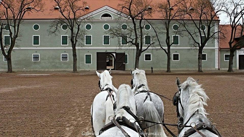 Domov mldee Stedn kola chovu kon a jezdectv